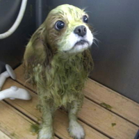 Dog Salon JACK-SONの写真