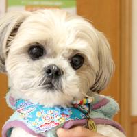 ますみ犬猫病院の写真