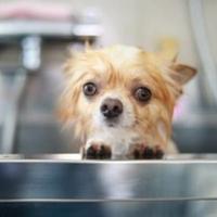 Dog Salon Sunnyの写真