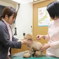 千城台動物病院の写真