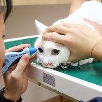 伊藤動物病院 野田分院(ペットホテル)の写真