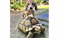 K9 Dog Life Adviserの写真