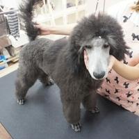 Dog Salon Liebeの写真