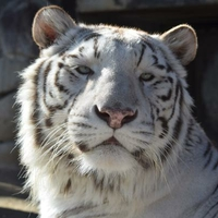 東武動物公園の写真