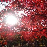 中野神社の写真