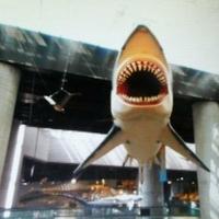 ミュージアムパーク 茨城県自然博物館の写真