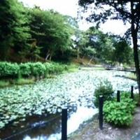 北山公園の写真