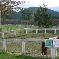 中津川市ふれあい牧場の写真