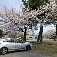 魚津総合公園の写真