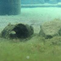 大野市役所 本願清水イトヨの里の写真