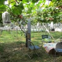三木ぶどう園の写真