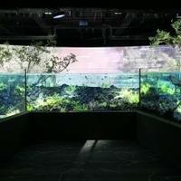 カワスイ川崎水族館の写真