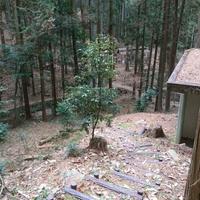 桑谷キャンプ場の写真