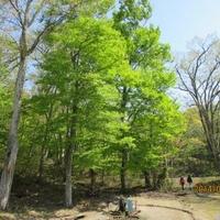 白神の森遊山道の写真