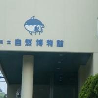 和歌山県立自然博物館の写真