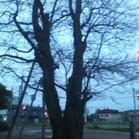 野幌開村緑地の写真