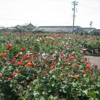 JA直売所 西尾市憩の農園の写真