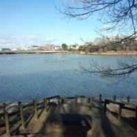 二ツ池公園の写真