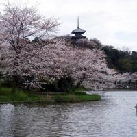 三溪園の写真