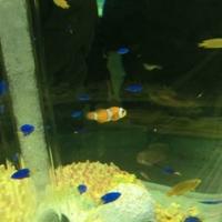 サンピアザ水族館の写真