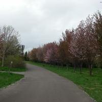 前田森林公園芝生広場の写真