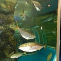 魚津水族館の写真