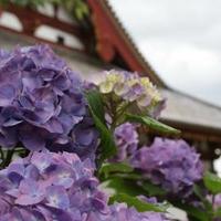 矢田寺(矢田山・金剛山寺)の写真