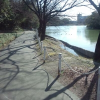 大池公園の写真