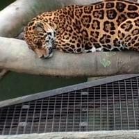 静岡市立日本平動物園の写真
