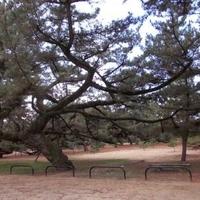 琴弾公園の写真