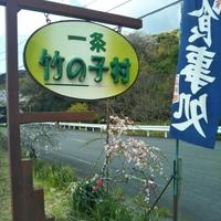 一条竹の子村の写真