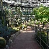 市川市観賞植物園の写真