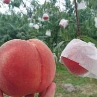 みちのく観光果樹園の写真
