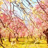 名古屋市農業センター delaふぁーむの写真