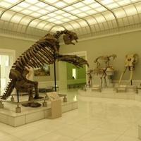 徳島県立博物館の写真