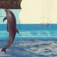新潟市水族館 マリンピア日本海の写真