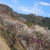冠山総合公園の写真