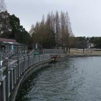 久喜菖蒲公園の写真