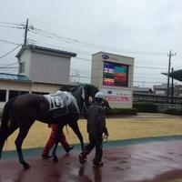 浦和競馬場の写真