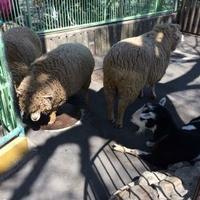 板橋区立こども動物園の写真