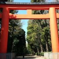井草八幡宮の写真
