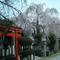 桜本坊の写真