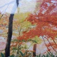 瑞宝寺公園の写真