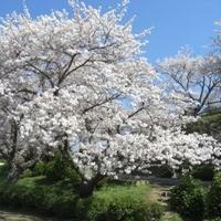 竜王山公園の写真