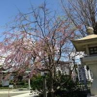 龍口明神社の写真
