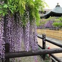 地福寺の写真
