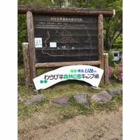 わらび平森林公園キャンプ場の写真