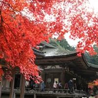 西明寺(湖東三山)の写真