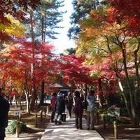 平林寺(金鳳山 平林寺)の写真