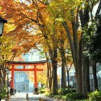 武蔵一ノ宮氷川神社の写真